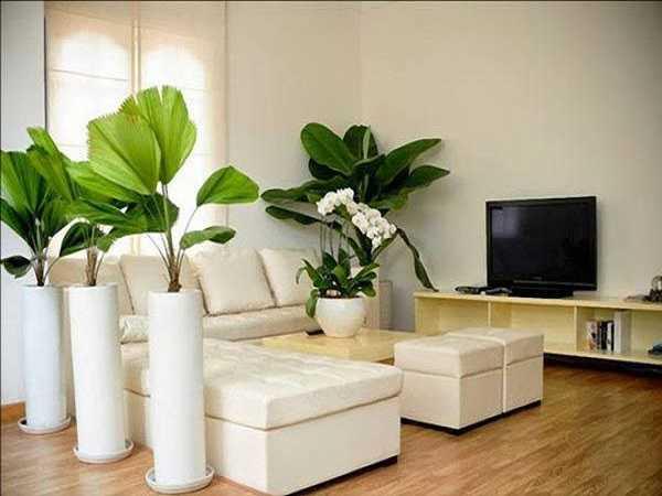 Những loại cây phong thủy trong nhà phù hợp