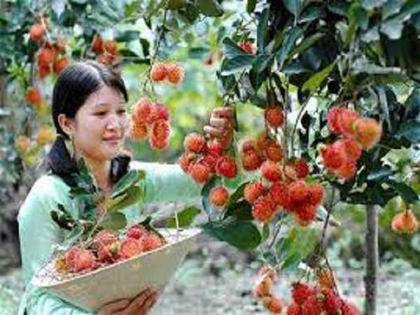 Điềm báo trong giấc mơ thấy hái trái cây