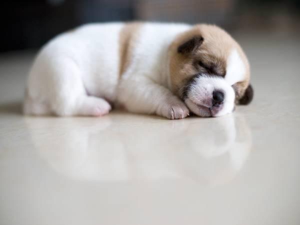 Mơ thấy chó báo hiệu điều gì? Đánh con gì chính xác nhất?