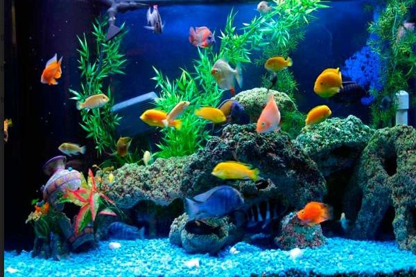Số lượng cá trong bể có ý nghĩa khác nhau