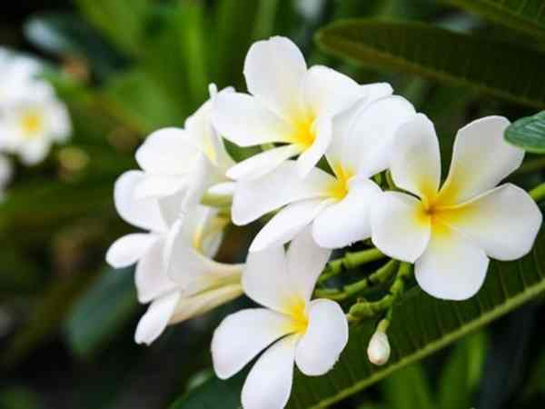 Mơ thấy hoa màu trắng báo hiệu điều gì, con số liên quan