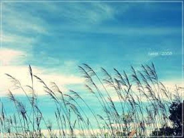 Mơ thấy gió có điềm báo gì? đánh con số nào?