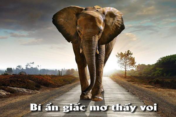 Mơ thấy voi có điềm báo gì? đánh con số nào trúng?