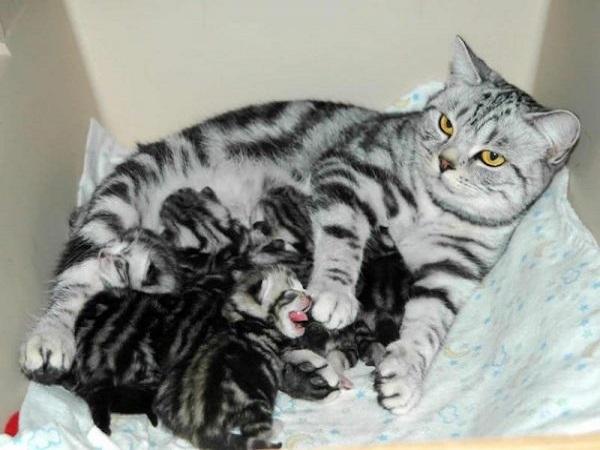 Mơ thấy mèo đẻ có điềm báo gì? đánh con số nào?