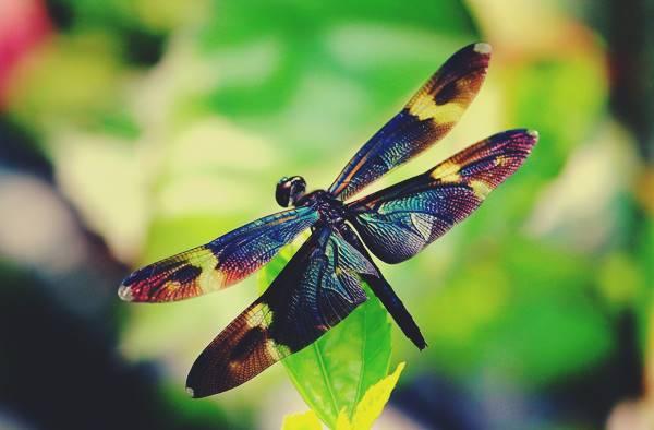 Giải mã giấc mơ thấy con chuồn chuồn là điềm báo gì? Đánh số mấy