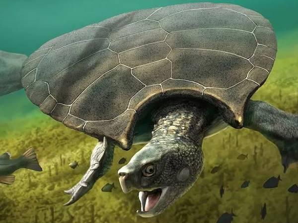 Mơ thấy rùa có phải điềm báo may mắn? Đánh ngay con gì?